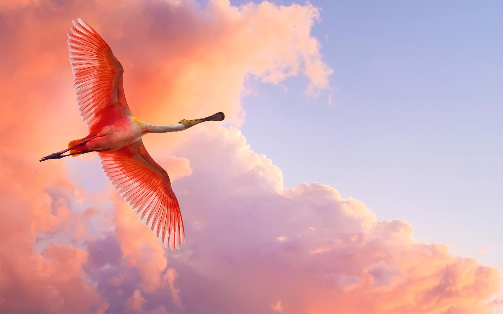Bird, clouds.jpg